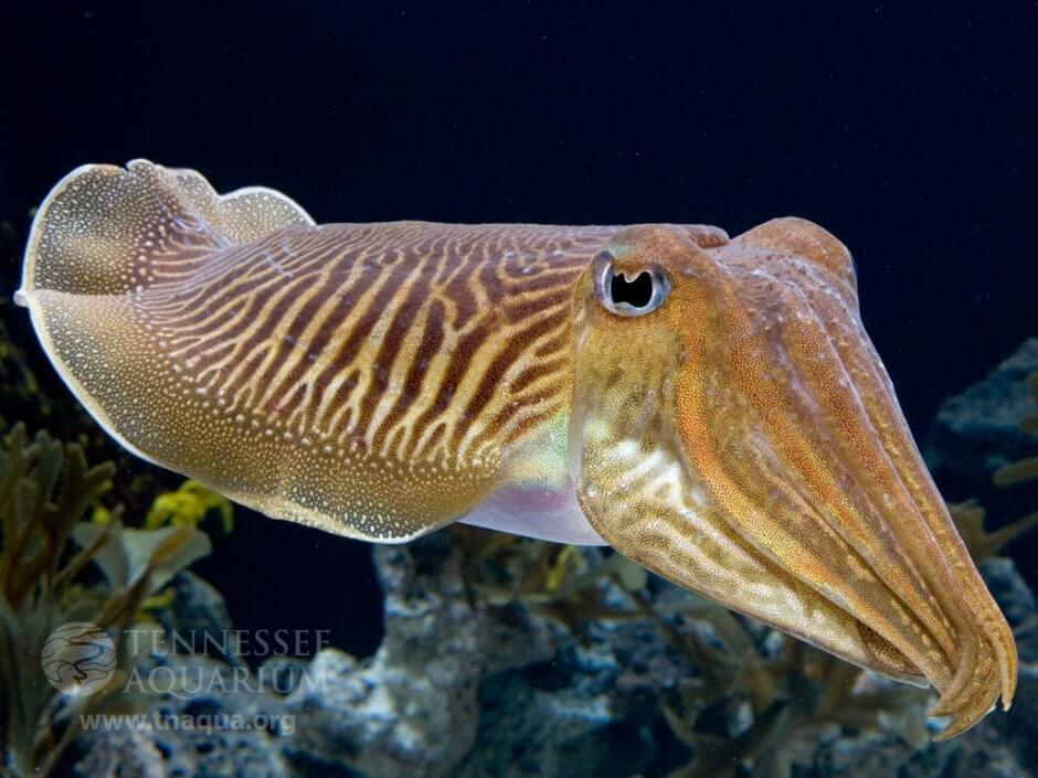 Чернила моллюсков помогут диагностировать болезни десен